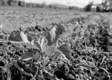 Антикризисное земледелие